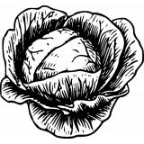 frisches Rohkostgemüse