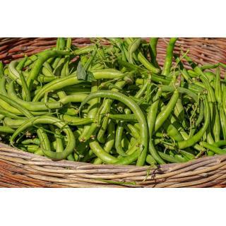 Buschbohnen