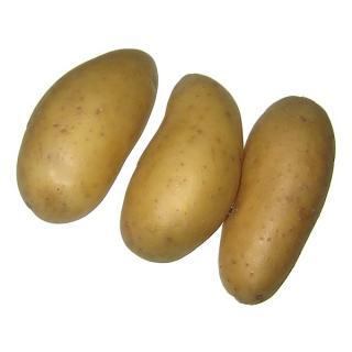 Frühkartoffeln -Sieglinde-